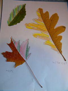 otoño 6